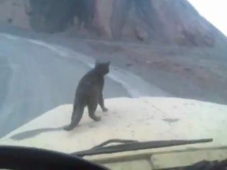 Кот едет на работу)